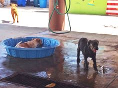 Saturday fun with rescued dogs at Playa Animal Rescue. #Mexico