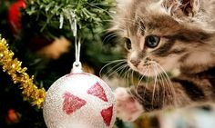Items similar to 4 Kitten Cat Santa Christmas Cat Kittens Holiday Greeting Notecards/ Envelopes Set on Etsy Christmas Kitten, Christmas Puppy, Christmas Animals, Christmas Holidays, Christmas Bulbs, Merry Christmas, Disney Christmas, Happy Holidays, Christmas Desktop