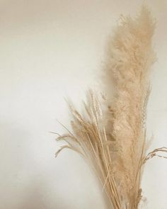 """labolens: """"Light furnishings of dried Wheat and Pampas Grass at our Founder & Creative Director space. (at Sydney, Australia) """" Dried Flower Bouquet, Flower Bouquet Wedding, Dried Flowers, Wheat Wedding, Wheat Flower, Earthy Home Decor, Pastel Room, Instagram Frame, Pampas Grass"""