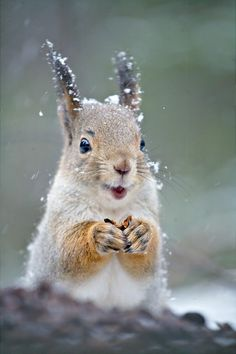 A little squirrel, says. Always be happy.... Hello :-)