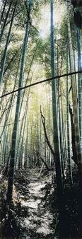 Bamboo Forest, Nara, Japon By Wim Wenders ,2000