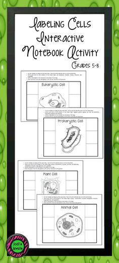 Pictures Of Plant And Animal Cells For Kids To Fill Out Plant And