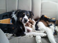 Nash and Bella love to ride in the car.