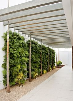 Neat privacy screen for a carport (the plants). Very chunky pergola roof beams, similar to Val n Eric pergola at Kincumber.