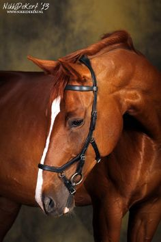 amazing and beautiful horse pictures ♥with rambo bridle