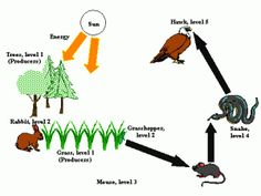 The Organisms Of Most Ecosystem Obtain In Three Basic Ways Producing Consuming And