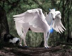 immagini di cavalli alati e unicorni - Cerca con Google | Immagini di cavallo, Immagini, Cavalli
