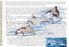 007 Transgascogne dauphins