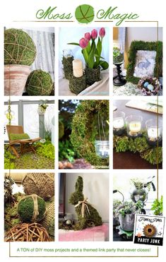 Moss Magic! A TON of DIY moss projects and a themed link party via Funky Junk Interiors