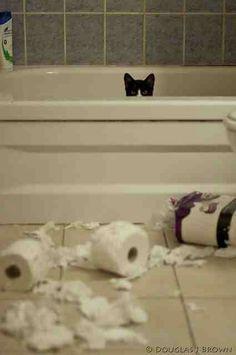 Bathtub kitty