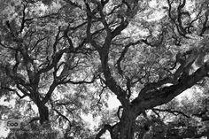 arbres by GregoireFillion. Please Like http://fb.me/go4photos and Follow @go4fotos Thank You. :-)