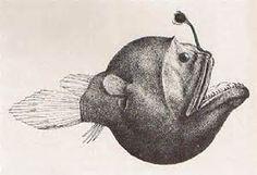 cute angler fish - Bing Images Fish Illustration, Antique Illustration, Fish Anatomy, Scientific Drawing, Stippling Art, Baroque Painting, Deep Sea Creatures, Deep Sea Fishing, Sea Monsters