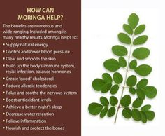 Healthy benefits of #Moringa Health And Nutrition, Health And Wellness, Health Foods, Natural Energy, Natural Healing, Shakeology Benefits, Moringa Benefits, Health Benefits, Moringa Oleifera