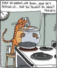 The cat is hungry and the fish are none the wiser. #funny #cat #cartoons