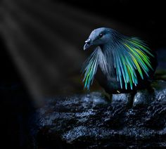 Nicobar in the Spotlight! by Sue Demetriou on 500px