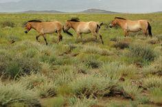 Stage 22 – Russia & Mongolia: Altai To The Gobi Desert [2/3 ...