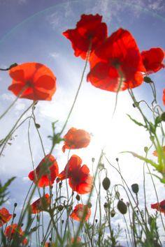 Voilà ce que l'on peut admirer, lorsque l'on est allongé dans un champs, par une belle journée d'été...
