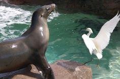 Sea lion vs. bird! Lion, Sea, Cool Stuff, Animals, Cool Things, Animales, Animaux, Leo, Lions