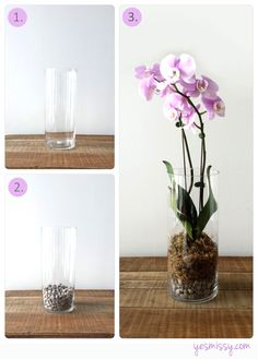 How to: Potting Terrarium Style Orchids