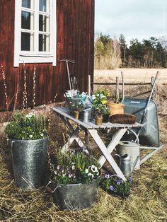 Vårplantering, vårsol och vårfåglar. GRÄSLÖK krukor och FRÖER odlingsset. Gästbloggare: Frida Eklund Edman