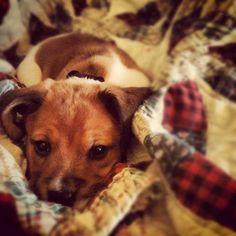 My puppy, Sullivan.