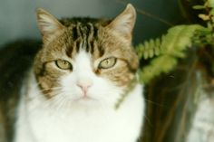 la gata nazira : foto de hace unos años jeje saludos   ahorayya2