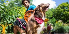 Dogs love Milwaukee! This dog-friendly city offers accomodations, dining and activities that welcome your furry friends. Plan a visit with your pup here!