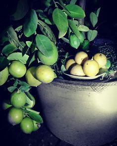 Hanya Lemon ...😊