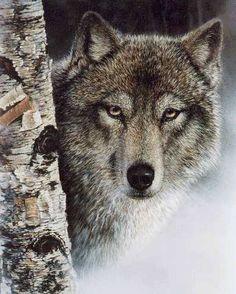 [Fronzolo] TOP 20 Animais Extintos [Fronzolo] - Fórum · Habbid