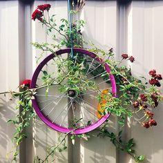 Greening a grey wall ⚘ Uma cerca cinzenta vira verde! @dnareboot #upcycle #permaculturaurbana #urbangardening #recycle #reciclar #kidsgardening #rose #rosas #rosasrojas