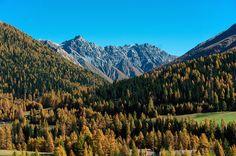 Larch Forest Explore, Mountains, Nature, Travel, Viajes, Naturaleza, Destinations, Traveling, Trips