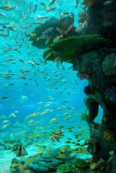 Tubbataha Reef in the Philippines, the only national marine park in the World Heritage List.