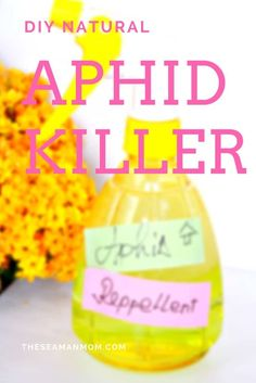 DIY APHID REPELLENT