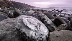 Why the Jurassic Coast Is One of the Best Fossil-Collecting Sites on Earth Along a famed stretch of English coastline, amateurs and professionals collect 200-million-year-old treasures before they are reclaimed by the waves Charmouth Beach, Monmouth Beach, Run Tour, Jurassic Coast, Out To Sea, Travel Magazines, World Heritage Sites, Prehistoric, Science Nature
