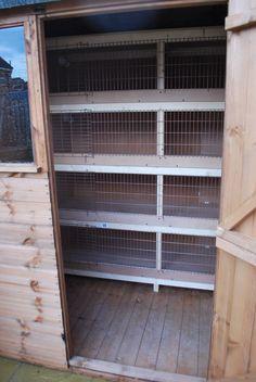 My Coturnix quail blog