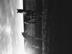 Grandpa and grandmas horses