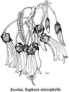 Kōwhai flowers Kowhai by Diana Adams Kowhai Earrings & Pendant 18 carat red and yellow gold Angie Dennis - Kowhai artblock Kowhai by *Tineswari on deviantART Kowhai Flower by Jo GallagherPaul. Maori Patterns, Jr Art, Maori Art, Border Design, Travel Aesthetic, Tattoo Drawings, Tattoos, Botanical Art, Leather Craft