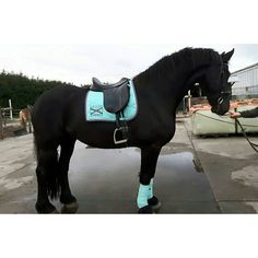 Scapa ice blue | outfit photo #scapasports #scapa #iceblue #friesian #friesianhorse #outfit