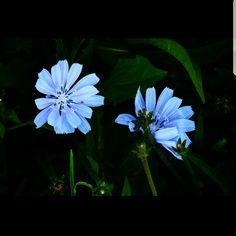 Llegó el tiempo de los aguaceros y del aroma tibio, y florecieron dos miosotis gemelos en la tierra roja del niño tonto y negro. -El negrito de ojos azules.