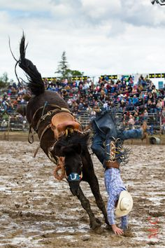 Oakdale Rodeo.......hitting the dirt....