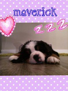 Maverick just chilling!!