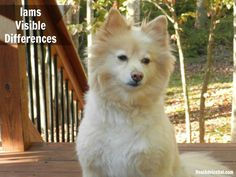 See the #Iams Visible Differences in Spankie.  #IamsDifference #AD
