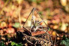 Terariu cu plante, piramidă din sticlă, lucrată manual - Greenarium Bird Feeders, Terrarium, Outdoor Decor, Home Decor, Garden, Plant, Terrariums, Decoration Home, Garten