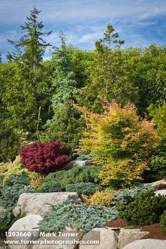1203660 Dwarf conifers w/ Japanese Maples [Abies cv.; Pinus sp.; Juniperus cv.; Thuja cv.; Acer palmatum cv.]. Jim Swift, Bellin