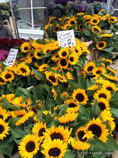 The 14 best markets in London! The Columbia Road Flower Market in east London is one of the city's most beautiful markets.