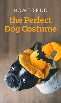 Don't leave your furry friends out of the fun this Halloween! Use these tips to find the perfect costume for your pup.