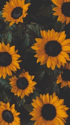 Wallpaper Pastel, Sunflower Iphone Wallpaper, Flower Phone Wallpaper, Cute Patterns Wallpaper, Iphone Background Wallpaper, Screen Wallpaper, Dark Wallpaper, Bts Wallpaper, Iphone Wallpaper Plants