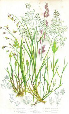 Wild grasses, beautiful weeds. Botanical #illustration by design squish #art…