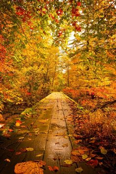 Would love to walk this Autumn path.
