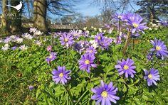 Spring arrives at Mount Juliet Estate. Visit us online at www.mountjuliet.ie